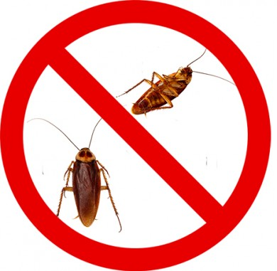 Guide effective insecticide at home